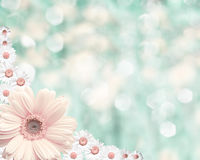 Fondo borroso frontera floral, manzanilla de las flores Imágenes de archivo libres de regalías