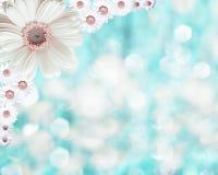 Fondo borroso frontera floral, manzanilla de las flores Fotografía de archivo libre de regalías