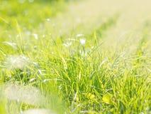 Fondo borroso natural hermoso de la hierba verde Foto de archivo