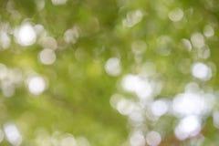 Fondo borroso natural verde Imágenes de archivo libres de regalías