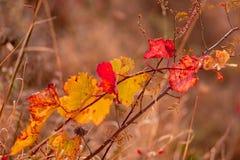 Fondo borroso naturaleza Profundidad del campo baja Vi?edo del oto?o Hierba seca y hojas amarillas Imagen entonada Copie el espac fotos de archivo libres de regalías