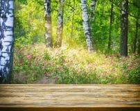 Fondo borroso soleado del verano del bosque con los abedules, de madera vacío Imagenes de archivo