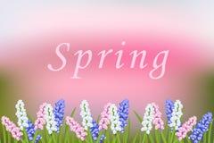 Fondo borroso vector de la primavera con las flores florecientes Muscari libre illustration