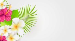 Fondo botanico tropicale con i fiori e le foglie di palma Immagine Stock