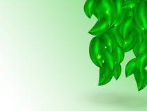 Fondo brillante abstracto del verano con el colgante de las hojas verdes ilustración del vector