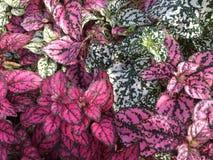 Fondo brillante coloreado de las hojas Fotos de archivo libres de regalías