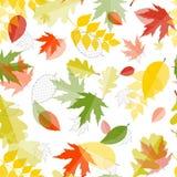Fondo brillante de Autumn Natural Leaves Seamless Pattern Vector Imagen de archivo libre de regalías