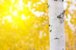 Fondo brillante del otoño Foto de archivo libre de regalías
