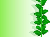 Fondo brillante del verde del verano con la rama verde vertical con las hojas Imagen de archivo libre de regalías