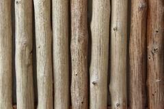 Fondo buono dell'eucalyptus Fotografia Stock