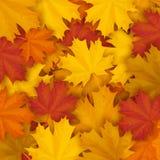 Fondo caduto delle foglie di autunno dell'acero Fotografie Stock Libere da Diritti