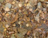 Fondo caido de las hojas Imagen de archivo