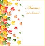 Fondo caido de las hojas de otoño Fotografía de archivo libre de regalías