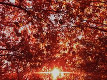 Fondo caido rojo del día soleado de las hojas del parque del otoño imagen de archivo