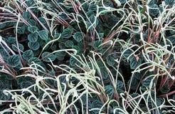 Fondo caprichoso de plantas Imagen de archivo