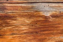 Fondo cercano para arriba de la madera del tronco del cedro Foto de archivo libre de regalías