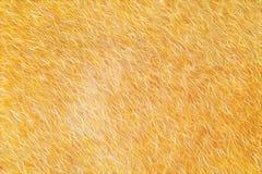 Fondo che astratto della pelliccia assomiglia a struttura della pelliccia Fotografia Stock
