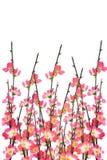 Fondo chino de los flores de cereza del Año Nuevo Foto de archivo libre de regalías