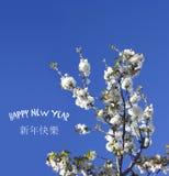 Fondo chino del Año Nuevo con el flor de la primavera Imagen de archivo