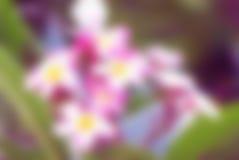 Fondo circular abstracto del bokeh de la flor Fotos de archivo