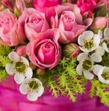 Fondo color de rosa del color de rosa hermoso Fotos de archivo libres de regalías