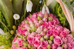 Fondo color de rosa del color de rosa hermoso Fotos de archivo