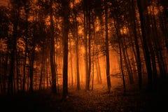 Fondo coloreado rojo oscuro del bosque del misterio Imagenes de archivo