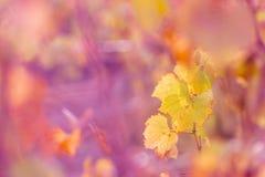 Fondo colorido borroso naturaleza Profundidad del campo baja Imagen entonada Copie el espacio Fotograf?a del arte imágenes de archivo libres de regalías