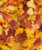 Fondo colorido con las hojas de otoño caidas Fotos de archivo