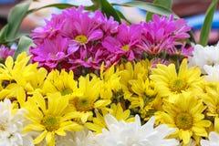 Fondo colorido de la flor Imagenes de archivo
