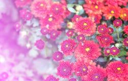 Fondo colorido de la flor fotos de archivo libres de regalías