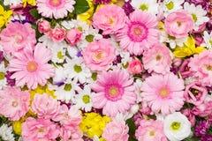 Fondo colorido de la flor Fotografía de archivo libre de regalías