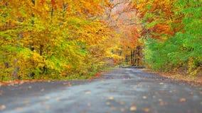Fondo colorido de la hoja él bosque cerca del camino