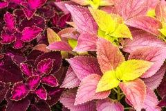 Fondo colorido de la hoja Foto de archivo libre de regalías