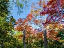 Fondo colorido de la hoja de arce en otoño Fotos de archivo