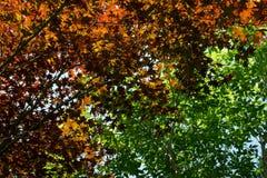 Fondo colorido de la naturaleza Imagen de archivo libre de regalías