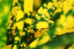 Fondo colorido de la textura de la hoja aislado imagenes de archivo