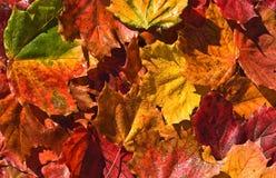 Fondo colorido de las hojas Foto de archivo