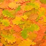Fondo colorido de las hojas de otoño Fotografía de archivo libre de regalías