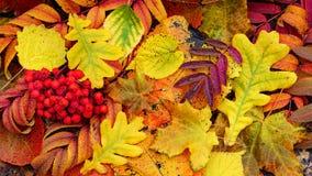 Fondo colorido de las hojas de otoño fotos de archivo