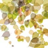 Fondo colorido de las hojas de otoño Fotos de archivo libres de regalías