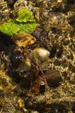 Fondo colorido de las hojas de otoño en un río Fotografía de archivo libre de regalías