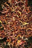 Fondo colorido de las hojas de oto?o caidas imágenes de archivo libres de regalías