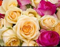 Fondo colorido de las rosas Fotos de archivo