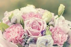 Fondo colorido de las rosas de la multiplicidad, profundidad del campo baja imagen de archivo