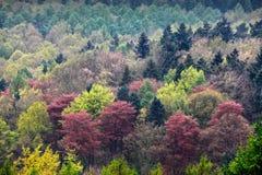 Fondo colorido de los árboles Imagen de archivo
