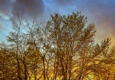 Fondo colorido del cielo de los árboles grandes Fotografía de archivo