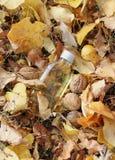 Fondo colorido del otoño con caída fotografía de archivo