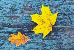 Fondo colorido del otoño con las hojas de otoño en textura de madera coloreada azul del vintage Fotos de archivo