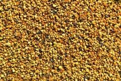 Fondo colorido del polen de la abeja Fotos de archivo